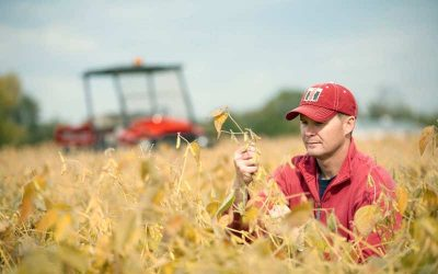 Use Yield Estimates to Help Guide Harvest Decisions, Advises Case IH