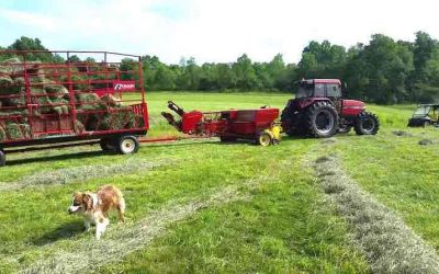 Testing Moisture Levels in Hay for Safe Storage [EQUIPMENT TALK]