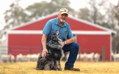 """Our 'Besties' Honored:  'Woody' is the winner of the Farm Bureau's first """"Dog of the Year"""" contest [VIDEO]"""