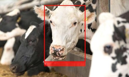 Facial Recognition Tech and Dairy Farms: Sensors Give Farmers Clear Picture Of Animal Health [INNOVATIONS]