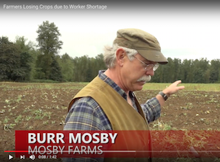 The Labor Shortage Problem: One Farmer's Story of $100,000 in Lost Profits and Productivity [VIDEO]
