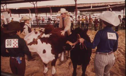 How the County Fair Influenced My Life