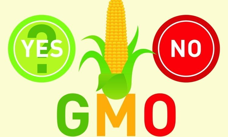 Debate Increasing About Genetically Modified Crop Yields