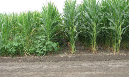 ImpactZ™ Herbicide Receives Federal Registration for Corn