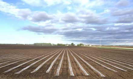 "New Biodegradable Film is like ""Putting a mini greenhouse directly on your seedbed."""