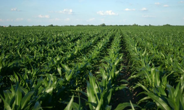 A Plant Analysis Can Help ID Trouble, Solutions [CASE IH guest post]