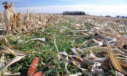 Thinking About Parking Your Plow? A few basic tips for the no-till 'Curious'