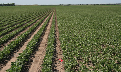 What to Consider When Setting Up an On-Farm Field Trial