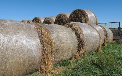 Net Wrap Versus Twine: Producers Need to Take Extra Precautions