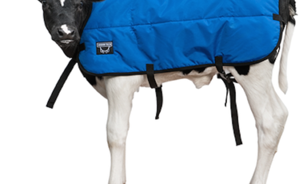 Large Calf Blankets Will Keep Your Animals Comfortable