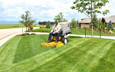 Mow a Masterpiece: How to get a lawn that turns heads [PRODUCT SPOTLIGHT]
