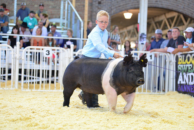 "This Year's World Pork Expo Was ""One for the Record Books"""
