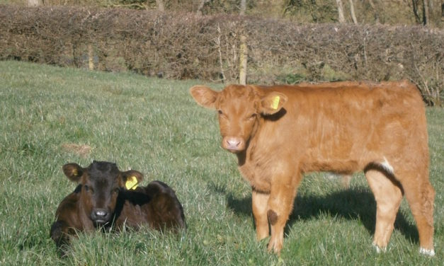 Ensure Your Calves Are Getting the Proper Nutrition for Optimal Growth
