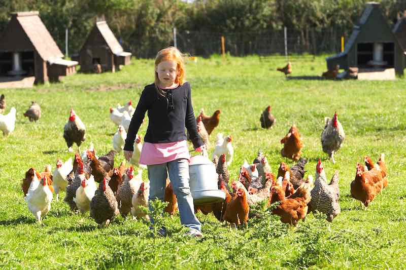 City Folks Want a Farm Life Experience: Agrotourism as an income option