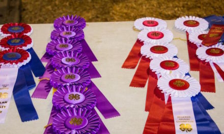 County Fair Livestock Judges and the Litmus Test