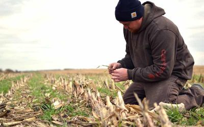 Calculating the Value of Cover Crops: New online tool available