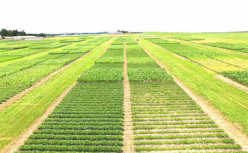 Crop Rotation Decrease Greenhouse Gas Emissions, According to University Study
