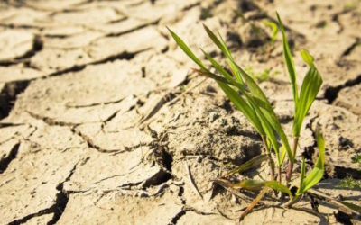 Agricultural Disasters of all Types Require Coping With Stress