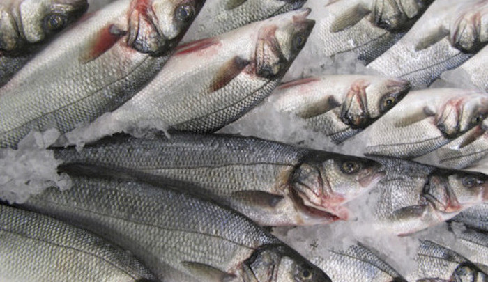 Fish Farming Could Cover Our Demand for Seafood One Hundred Times Over, Paper Estimates