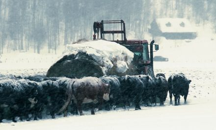 Baby, It's Cold Outside: Managing Cattle through an Arctic Blast