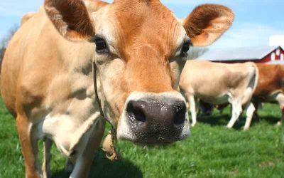 Ten Tips to Increase Dairy Profits in 2019