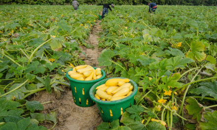 Immigrant Farmworkers Less Likely to Use SNAP, According to UC Davis Economists