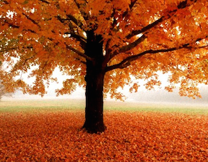 November: A Time To Be Thankful