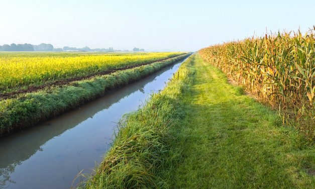 Saturated Buffers Reduce Nutrient Loading from Tile Drainage Waters