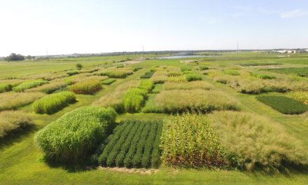 Switchgrass: Could it Be a Good Option for Farmers Who Have Lost Fertile Topsoil?