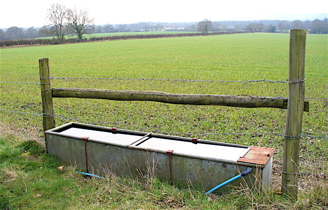 Are Your Cattle Getting E. coli at the Water Trough?
