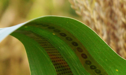 Wearable Sensors for Plants Developed to Monitor Water Use
