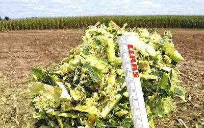 Feeding Efficiency in Finishing Beef Cattle Increases with CLAAS SHREDLAGE® [PRODUCT SPOTLIGHT]