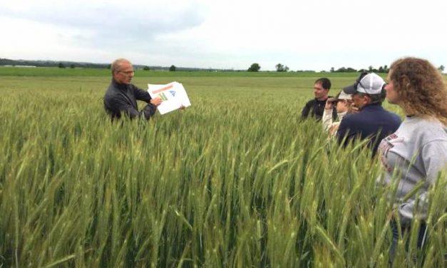 Hybrid Rye: An Alternative Crop Worth Consideration