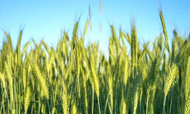 Consider These Alternative Crops for Income Diversification