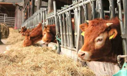 Forage Inoculants and Preservatives: Essentials for an optimal forage program