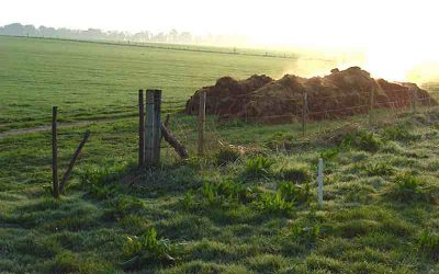 Avoid Insurance Gaps and Claims on Your Farm's Most Common Pollutant